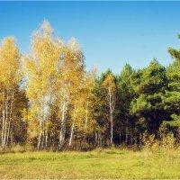 Золотая осень :: Дмитрий Конев
