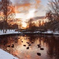 Первый снег :: Максим Борзаковский