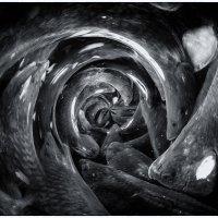 карпы :: Slava Hamamoto