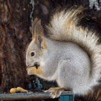 И орешки все грызет... :: Kogint Анатолий