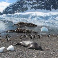 Охота на тюленя :: Татьяна Васильева