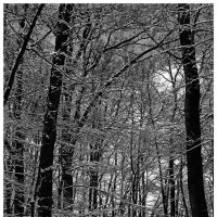 В лесу... :: gutgesehen
