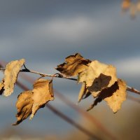 Осенний мотив. :: Маргарита ( Марта ) Дрожжина