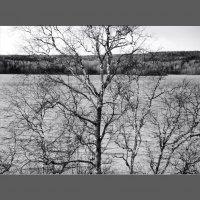 Озеро. Предзимье. :: sv.kaschuk