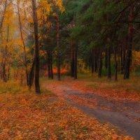 яркие краски осени :: Елена Баландина