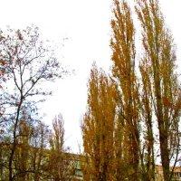 осень во дворе :: Александр Корчемный