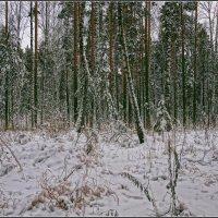 02.Ноябрь :: Владимир Холодный