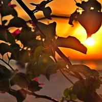 Я пришел к тебе с приветом рассказать, что Солнце встало... :: Oksana
