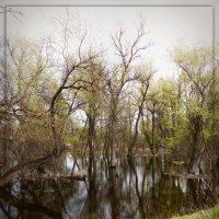 затопленный лес :: Светлана Бициоха