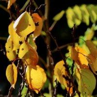 Грустные листья :: Валерий Дворников