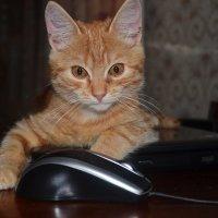 кошки-мышки :: Светлана