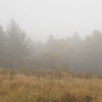 Туман :: Владимир Бедак