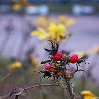 Осенние плоды :: Алексей Чебыкин