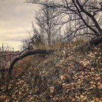 В темном, темном лесу... :: лиана алексеева