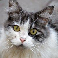 кошка :: Игорь Попов