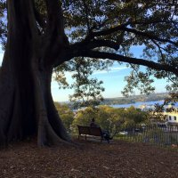 В старинном парке. Сидней. Австралия. :: Люда Валяшки