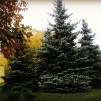 Осень, вновь напомнила душе о самом главном... :: Ольга Кривых