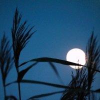 Холодная луна :: Евгения Кирильченко