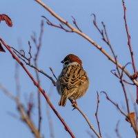 Наступают нелёгкие времена для птиц,  да и для людей эта зима 2014-2015 года будет очень суровой. :: Анатолий Клепешнёв