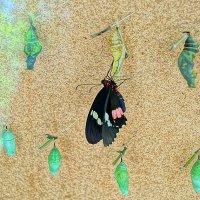 Рождение бабочки. :: Alex