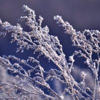 зима :: Мария Чуева