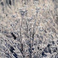 ....был сильный мороз.... :: Мария Чуева