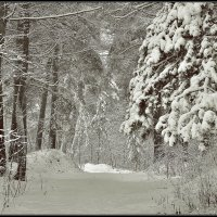 Начало зимы :: Дмитрий Конев