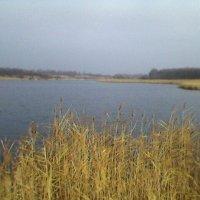На озере :: Миша Любчик