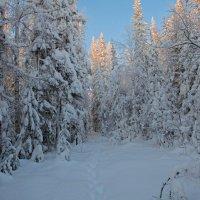Следы на снегу :: vladimir Bormotov