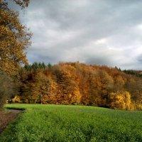 дорога в осень :: Olga
