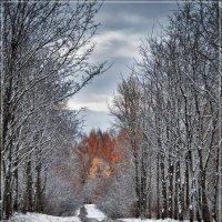 """Из серии """"Первый снег"""" :: Владимир Белозеров"""