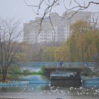 Городской пейзаж :: Raisa Ivanova