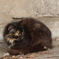 Рыжебелочёрный кот. :: Сергей Касимов