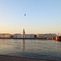 городской пейзаж с чайкой :: Елена