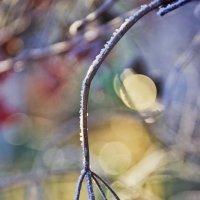 Первые морозы. :: Svetlana Sneg
