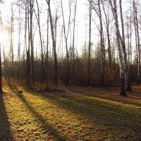 IMG_5443 - Ноябрьские тени :: Андрей Лукьянов