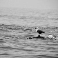 чайка :: Юлия Панюта