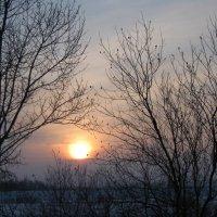 Морозное утро :: Вера Андреева