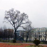На Цветном бульваре :: Лариса Корженевская