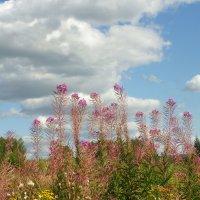 А на лугу росли цветы... :: Святец Вячеслав