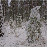 04.Ноябрь.Ночью был первый снегопад. :: Владимир Холодный