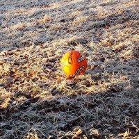 До лета, мячик! :: Фотогруппа Весна.