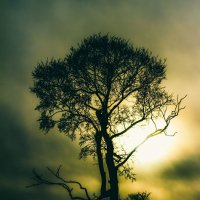 Дерево... :: Алексей Шехин