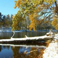 встреча осени с зимой :: Татьяна