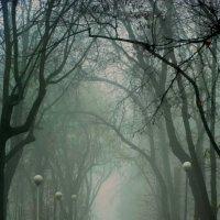 Туманный рассвет :: Евгения Кирильченко