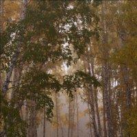 Сказочный лес. :: Людмила Якимова