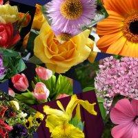 Цветочное многообразие. :: Елена