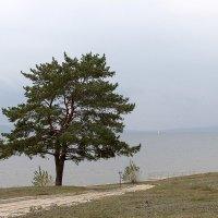 Дерево :: Олег Манаенков