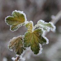 зимняя сказка :: Наталья Ястребова