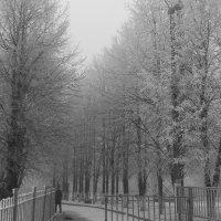 Чародейкою зимою... :: Наталья Дмитриева